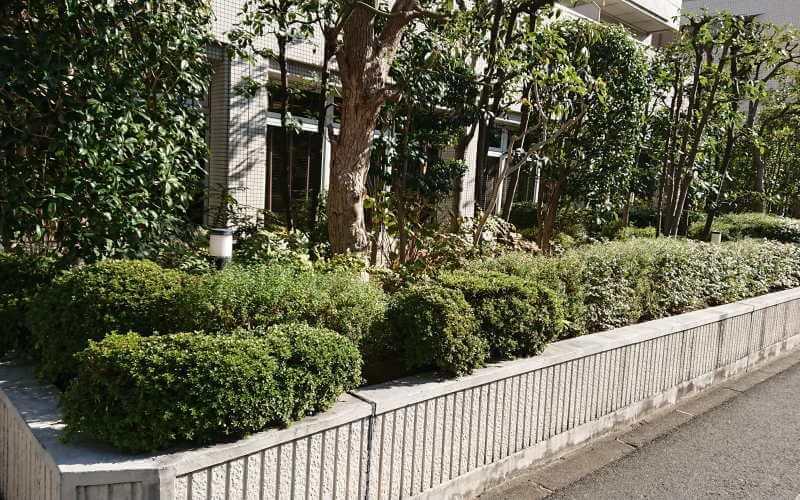 ラ・メール北大阪 植木